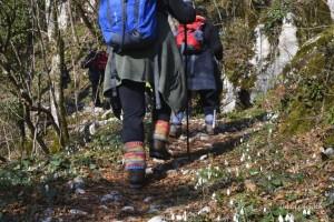 Passeggiata Naturalistica su Sentieri Inediti: il Planino, gli Alberi e la Cucina di Sale e Pepe @ Stregna (UD) | Stregna | Friuli-Venezia Giulia | Italia