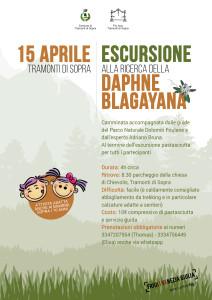 Escursione alla Ricerca della Daphne Blagayana @ Tramonti di Sopra (PN) | Tramonti di Sopra | Friuli-Venezia Giulia | Italia