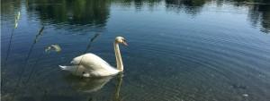 Sagra della Burida - 40^ ed. della Festa del Lago @ Porcia (PN) | Friuli-Venezia Giulia | Italia