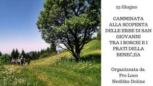 Camminata alla Scoperta delle Erbe di San Giovanni @ Stregna (UD) | Stregna | Friuli-Venezia Giulia | Italia