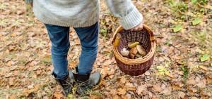 """""""Andar per Funghi: Come Riconoscerli?"""" @ Barcis (PN)   Barcis   Friuli-Venezia Giulia   Italia"""