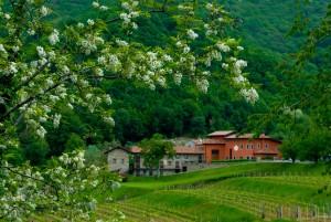 In Gastaldia. Passeggiata tra Olivi e Aziende Olearie. @ Colloredo di Soffumbergo (UD)   Colloredo di Soffumbergo   Friuli-Venezia Giulia   Italia
