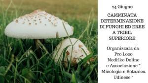 Determinazione di Funghi ed Erbe @ Tribil Superiore (UD)   Tribil Superiore   Friuli-Venezia Giulia   Italia