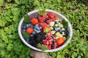 Festa dei Frutti di Bosco @ Forni Avoltri (UD) | Forni Avoltri | Friuli-Venezia Giulia | Italia