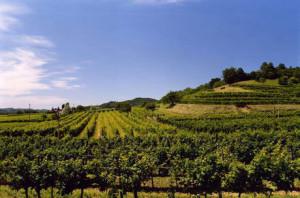 La rivoluzione del turismo enogastronomico regionale: nasce la Strada del Vino e dei Sapori del FVG @ Treppo Grande | Vendoglio-Carvacco | Friuli-Venezia Giulia | Italia