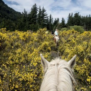 Trekking a cavallo in Malga @ Bram's ranch (Paularo) | Friuli-Venezia Giulia | Italia