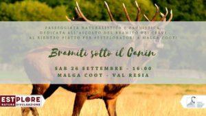Bramiti sotto il Canin @ Malga Coot | Friuli-Venezia Giulia | Italia