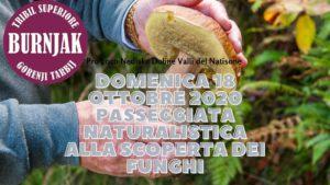 Passeggiata naturalistica alla ricerca dei funghi nel Comune di Stregna @ Tribil Superiore | Stregna | Friuli-Venezia Giulia | Italia